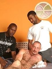 Interracial gay bear fucks & sucks 2 young blacks
