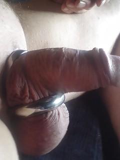 Various penises dicks cocks 14
